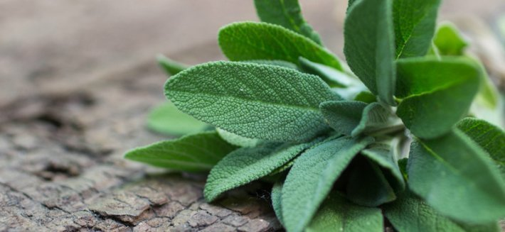 Salvia: da ingrediente in cucina a elemento benefico
